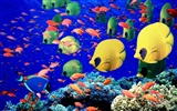 Marine Life Wallpaper Selection (2)