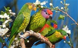 HD Wallpapers Birds Photo