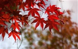 Japan Tour: Berg Rokko Blätter