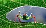 Insect Photo Wallpaper