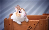 Cute little bunny Tapete