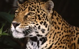 Webshots Animal Wallpapers (1)
