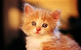HD wallpaper cute cat photo