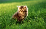 HD wallpaper cute cat photo #27