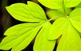 Widescreen HD wallpapers Plants #38
