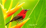 Lovely spring bird wallpaper