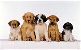 Puppy Photo HD wallpapers (1) #1