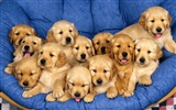 Puppy Photo HD wallpapers (1) #3