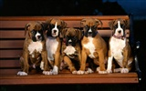 Puppy Photo HD wallpapers (1) #5