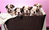 Puppy Photo HD wallpapers (1) #6