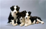 Puppy Photo HD wallpapers (1) #7