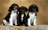 Puppy Photo HD wallpapers (1) #15