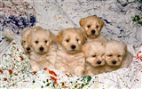 Puppy Photo HD wallpapers (1) #17
