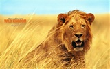 Wild Kingdom Animal Wallpapers #11