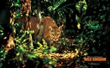 Wild Kingdom Animal Wallpapers #15