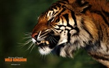Wild Kingdom Animal Wallpapers #22