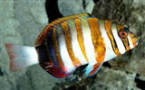 Colorful tropical fish wallpaper albums