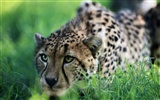Animal Widescreen Wallpapers Collection (2)
