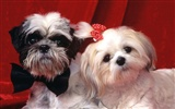 1600 dog photo wallpaper (3)