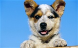 1600 dog photo wallpaper (4)