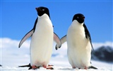 Penguin Photo Wallpaper