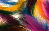 Colorful feather wings close-up wallpaper (1)