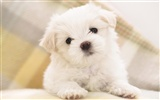 Puppy Photo HD wallpapers (8) #6