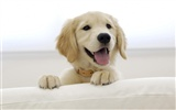 Puppy Photo HD wallpapers (8) #16