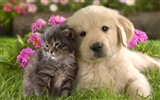 Puppy Photo HD wallpapers (8) #19