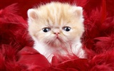 1600 Cat Photo Wallpaper (9)