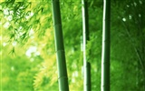 Green bamboo wallpaper albums