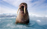 National Geographic animal wallpaper album (3)
