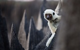 National Geographic animal wallpaper album (5) #10