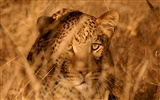 National Geographic animal wallpaper album (5) #11