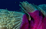 National Geographic animal wallpaper album (5) #12