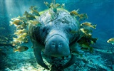 National Geographic animal wallpaper album (5) #13