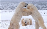 National Geographic animal wallpaper album (5) #16