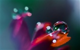 HD wallpaper flowers and drops of water #6