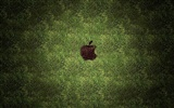 Apple Thema Tapete Album (28) #16