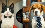 Cats and Dogs: The Revenge of Kitty Galore HD wallpaper