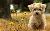 Animal Widescreen Wallpapers Collection (21) #12