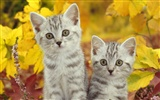 Widescreen Wallpapers Colección de animales (26) #12