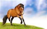 Super horse photo wallpaper (2)