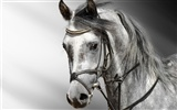 Super horse photo wallpaper (2) #9