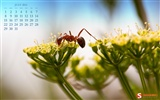 Juli 2012 Kalender Wallpapers (2)