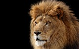 Mac OS X the Lion Apple systems official HD wallpapers #14