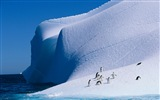 Windows 8 Wallpaper: Antarktis, Schnee Landschaft der Antarktis Pinguine