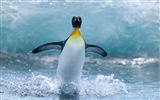 Windows 8 Wallpaper: Antarktis, Schnee Landschaft der Antarktis Pinguine #6