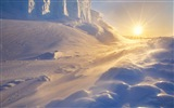 Windows 8 Wallpaper: Antarktis, Schnee Landschaft der Antarktis Pinguine #9
