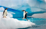 Windows 8 Wallpaper: Antarktis, Schnee Landschaft der Antarktis Pinguine #12